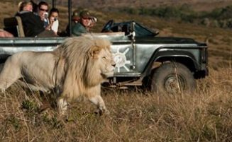 Guided Game Drives